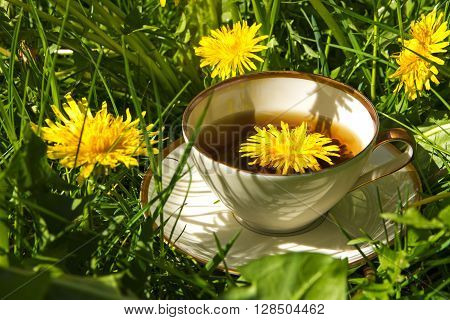 tea from dandelion in a china cup standing outside in the sunny lawn between dandelion leaves and flowers healing herb directly from nature selected focus narrow depth of field