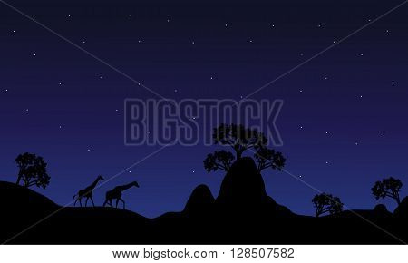 Silhouette of giraffe at night on the hills