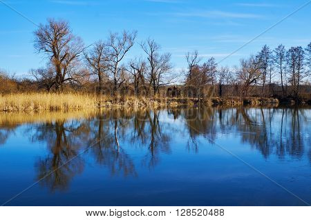 Old bare trees on the riverside mirrored in the river in spring