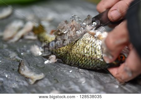 Man Gut And Clean A Fish