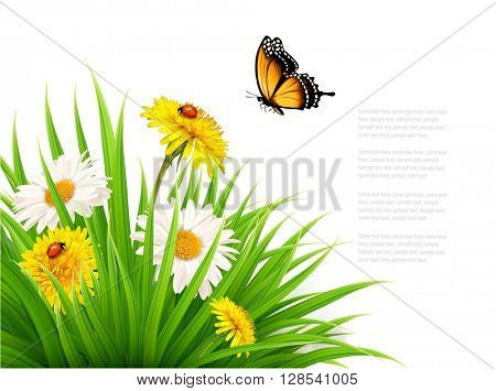 Nature summer background with daisy flower with butterfly. Vector illustration.