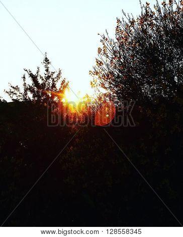Il sole ed i suoi raggi penetrano tra i rami