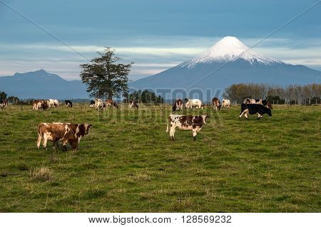 Idyllic landscape of Osorno Volcano Lake Region Chile