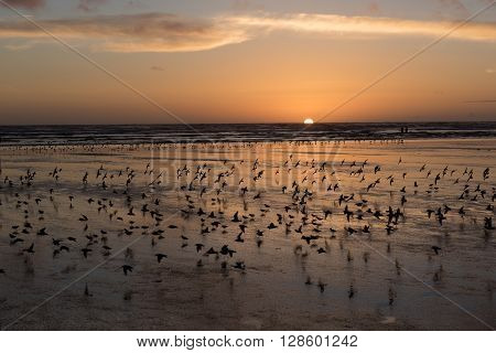 Bird frenzy at a west coast beach