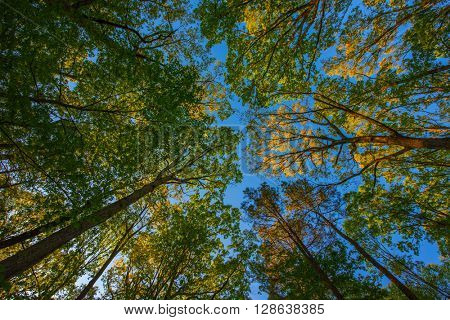 Converging trees form a  beautiful background