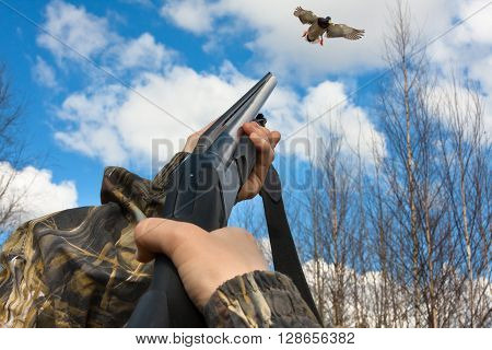hands of hunter in camouflage shooting from a gun to duck
