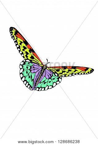 Butterfly With Open Wings In A Top View As A Flying Migratory Insect Butterflies