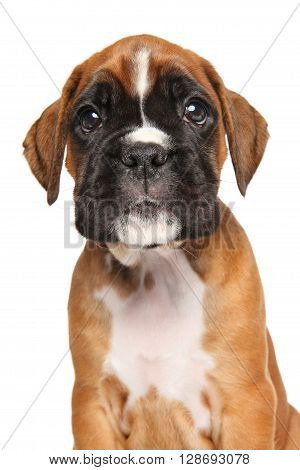 Boxer Puppy Isolated On White