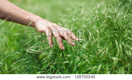 Woman's hand touching grass feeling the nature