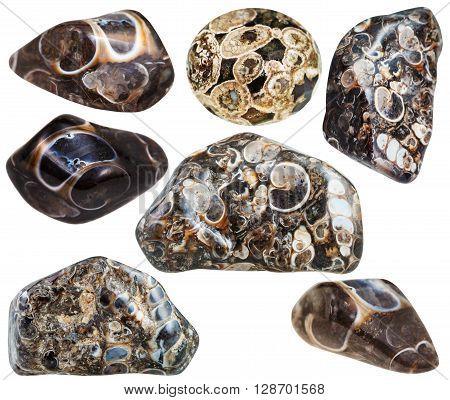 Set Of Various Turritella Agate Mineral Stones