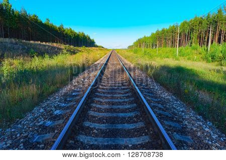View of railroad track with green forest on both sides