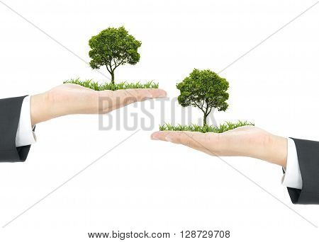 growth concept with 2 of trees on hand