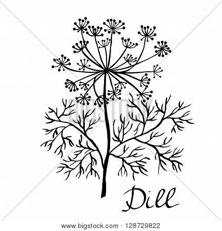 Vector dill illustration vector dill isolated. Dill plant sketch. Hand drawing dill. Dill herb vector card. Dill on white. Hand drawn vector illustration sketch. Elements for design.