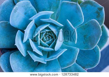 Rectangular arrangement of succulents; cactus succulents in a plante