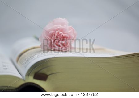 Holy Bible Opened With A Carnation On It