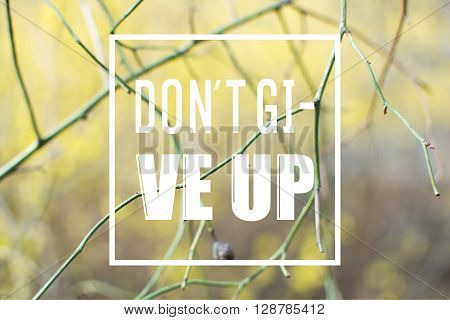 the phrase dont give up written over sad spring or autumn background with branches and defocused bushes.