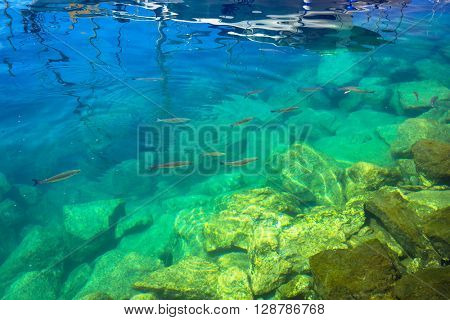 Fishes in turquise water of Atlantic ocean at Gran Canaria island