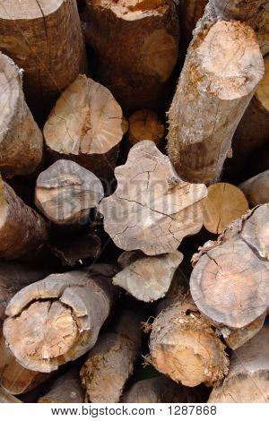 Piled Firewood Trunks