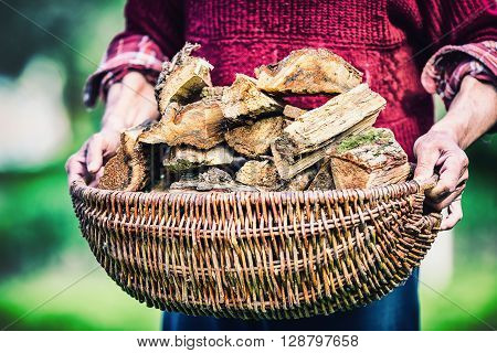 Pensioner farmer holding basket full of firewood. Man senior holding wood out of a basket to ignite the fireplace.