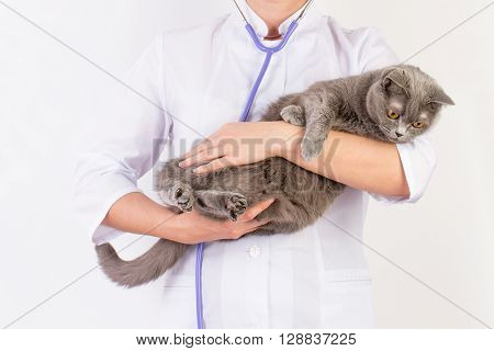 The Veterinarian Holds A Cat In Her Arms