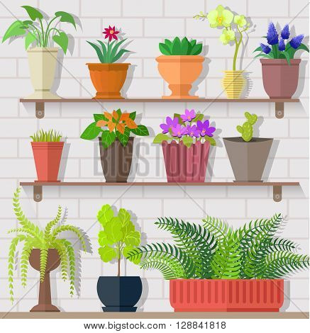 Houseplant set design flat concept. Houseplant and house plant, plant pot isolated, indoor plants, flower and green nature, leaf and pot set, gardening growth, vector illustration