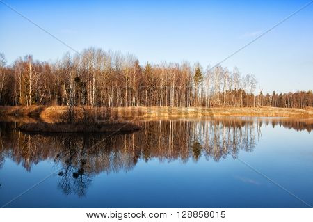 rees are reflected in water early in the morning in the spring