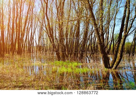 Forest spring landscape - woods flooded with overflowing spring water. Spring colored landscape.