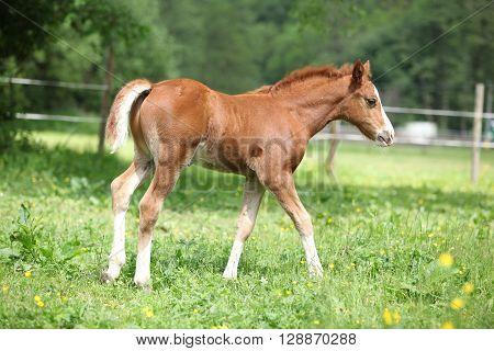 Amazing Foal On Pasturage