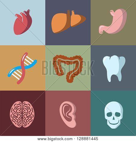 Internal human organs flat vector icons set. Anatomy organ, medical organ human, icon organ illustration