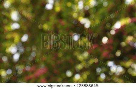 Coloured bokeh small predominance of green color