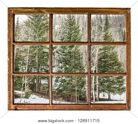 spruce and aspen grove  in winter  as seen  through vintage, grunge, sash window with dirty glass - travel or vacation concept