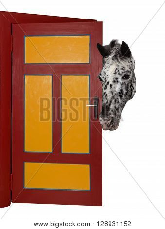 A Cheeky Horse Is Looking Into A Room.
