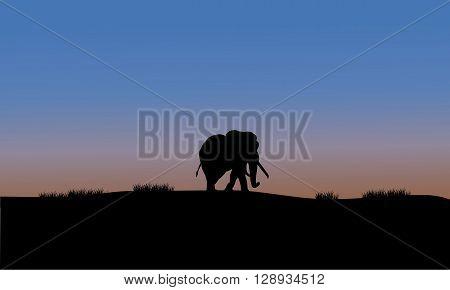 Single elephant of silhouette on the fields