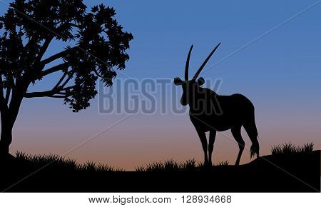 Single antelope of silhouette in park at the sunset