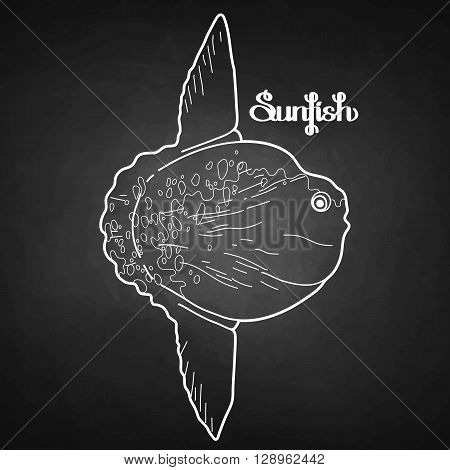 Graphic vector sunfish isolated on chalkboard. Sea and ocean creature in black and white colors