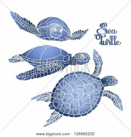 Graphic Hawksbill sea turtle collection drawn in line art style. Ocean vector creatures in blue colors isolated on white background. Coloring book page design