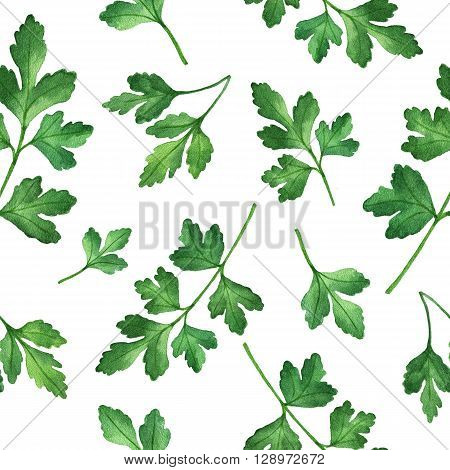 Watercolor seamless pattern hand drawn herb parsley. Watercolor leaves and branches of parsley on a white background. Herbs for packaging design, cards, postcards and book illustrations.