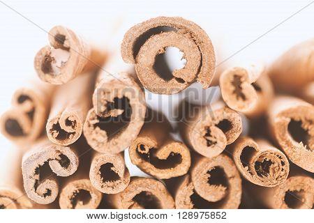 Artistic cross section view of Raw Organic Cinnamon sticks (Cinnamomum verum) isolated on white background.