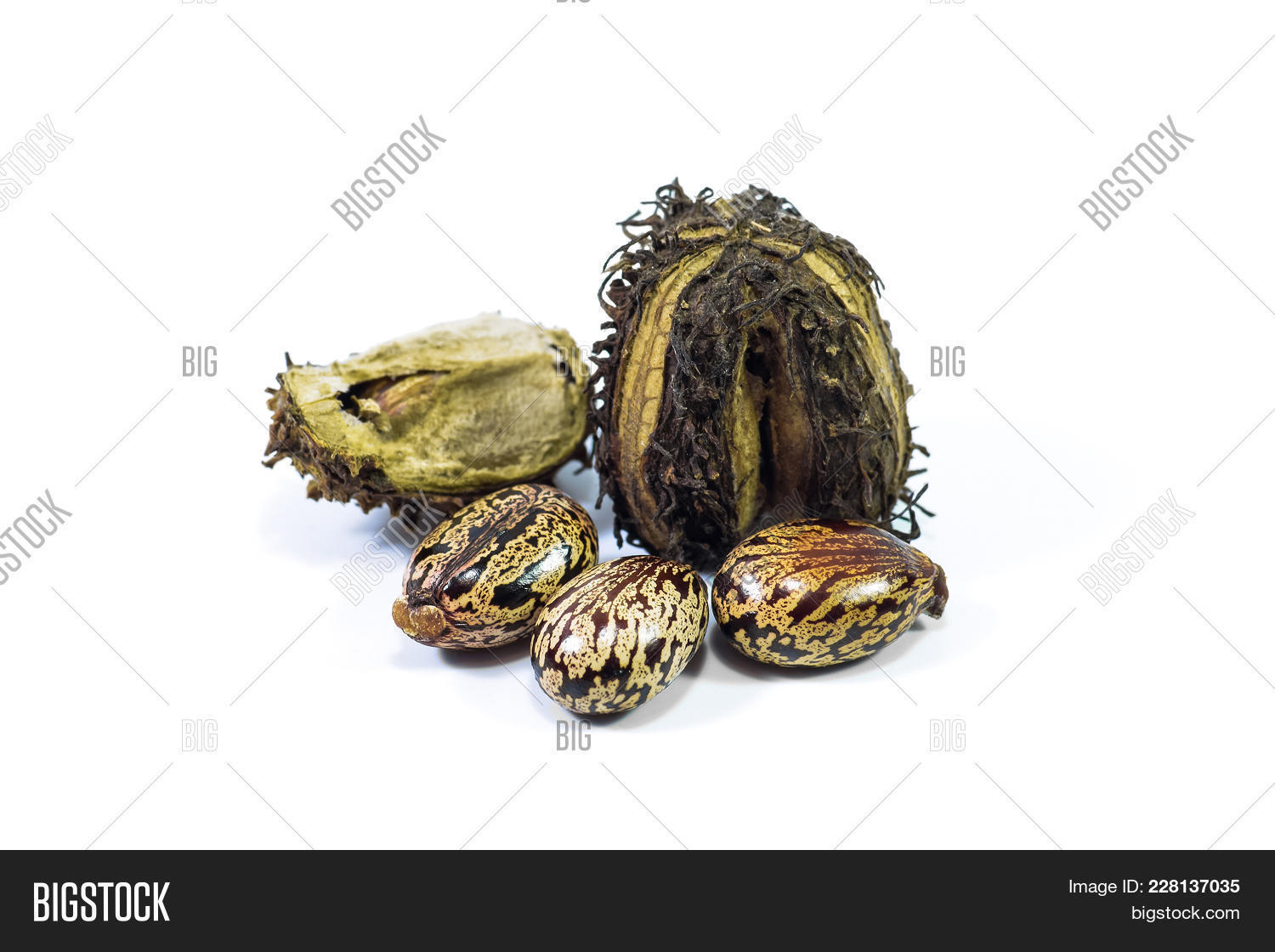 Castor Seeds On White Image & Photo (Free Trial) | Bigstock