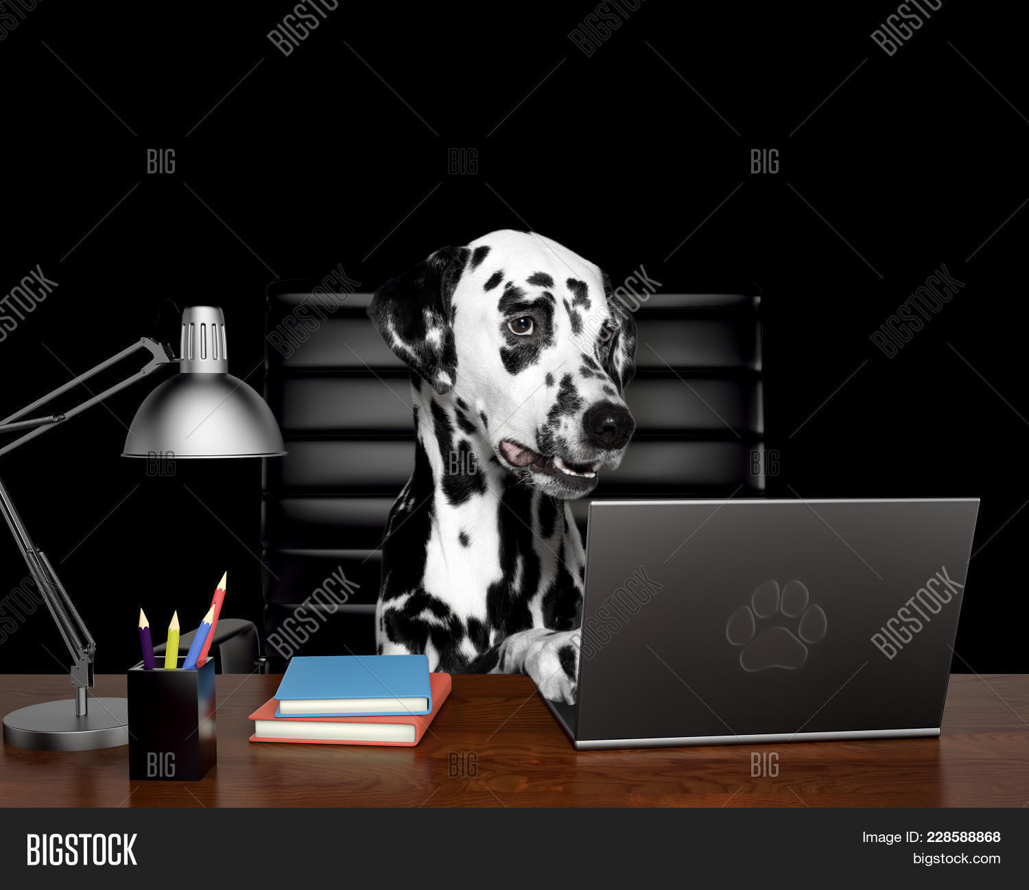 Dalmatian Dog Powerpoint Template Dalmatian Dog Powerpoint Background
