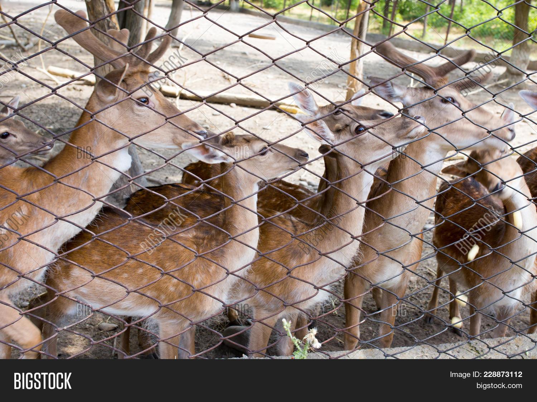 Deer in a zoo powerpoint template powerpoint template deer in a p toneelgroepblik Images