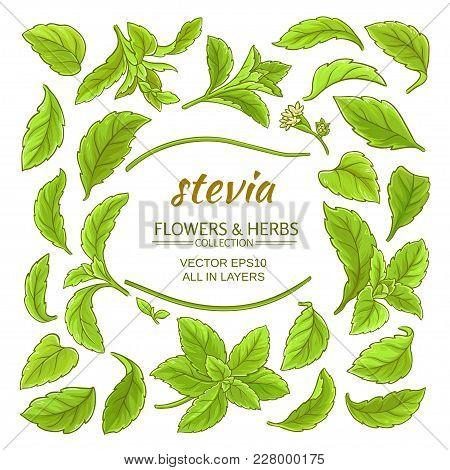 Stevia Elements Vector Set On White Background