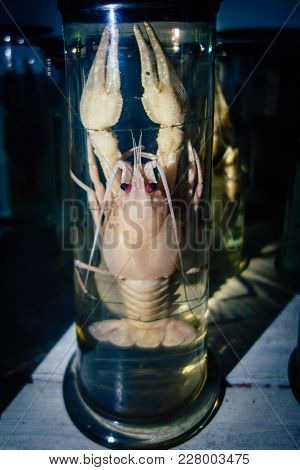 Dissected Animal In Preserved Liquid. Text Says Name Of Animal In Russian.