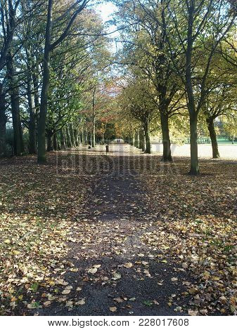 Town Centre Park, Trees Leaves And A Path
