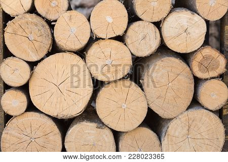 Texture Of The Ends Of The Logs Lying On One Another, Close-up Photos