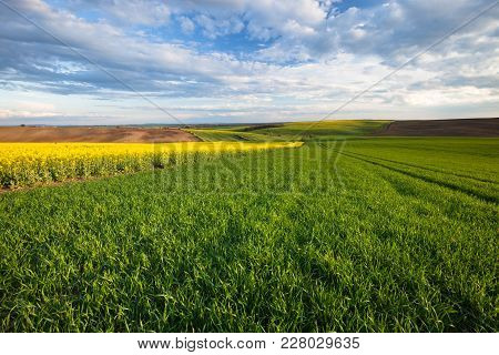Beautiful Spring Yellow And Green Field Landscape