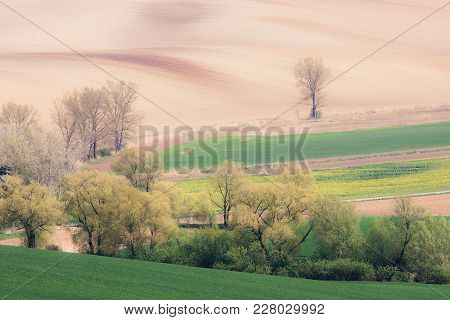 Rolling Hills And Green Grass Spring Fields