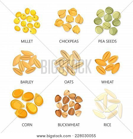 Plant Seeds Isolated Icons. Barley And Wheat, Common Oat And Corn, Rice And Buckwheat, Millet And Pe