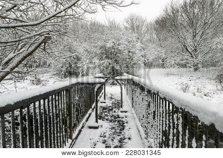 Winter Landscape In A Forest Park With Trees Covered With Snow