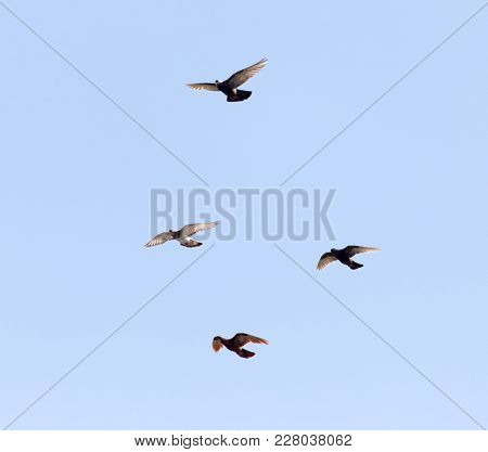 Flock Of Pigeons On Blue Sky . In The Park In Nature